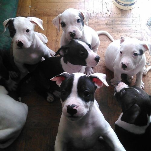 Some of the puppies...getn big and ready to go! For sale...give me a great price!