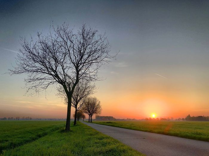 Bare trees lining a Countryside Road between the farmfields underneath a warm and colorful sunrise Sky Tree Plant Sunset Landscape Beauty In Nature Nature Tranquility Tranquil Scene Field Environment Scenics - Nature No People Land Sun Growth Rural Scene Cloud - Sky Outdoors Bare Tree
