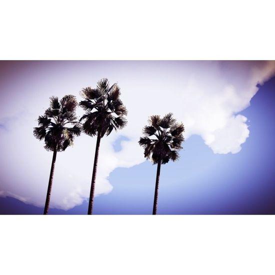 Vespucci Beach Gtaphotographers Gta Online