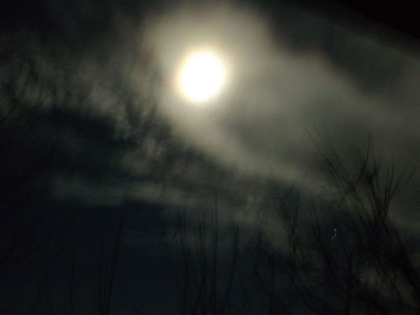 Trees Beauty In Nature Blury Pic Clods Close-up Low Angle View Moon Nature No People Outdoors Scenics Sky Tranquil Scene Tranquility