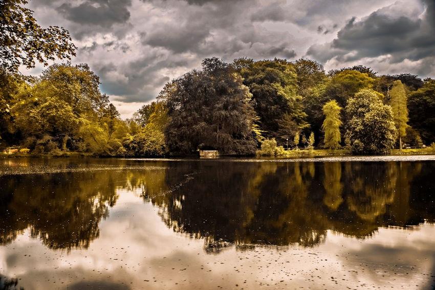 The Rombergpark Dortmund Germany. Dortmund EyeEm Best Edits EyeEm Nature Lover Fall Beauty Germany Lake Lake Veiw Landscape Landscape_photography Nature Rombergpark
