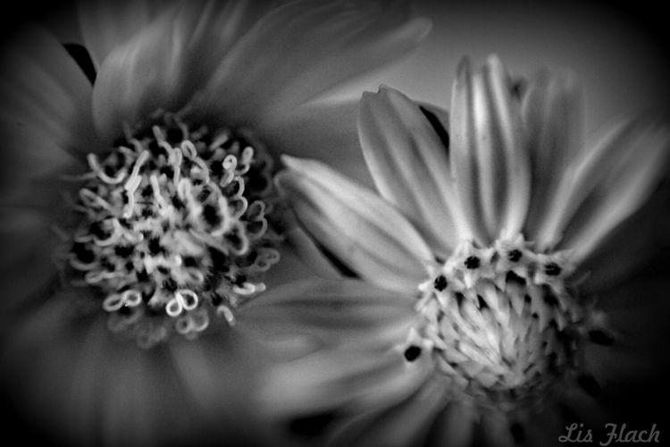 Flower Flores Flor Photography Fotografiaamadora