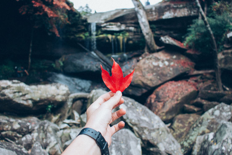 Maple,Pukradung,Thailand. Body Part Change Close-up Day Finger Focus On Foreground Hand Holding Human Body Part Human Hand Human Limb Leaf Maple Maple Leaf Nature One Person Outdoors Personal Perspective Plant Part Real People Red Rock Rock - Object Solid Unrecognizable Person