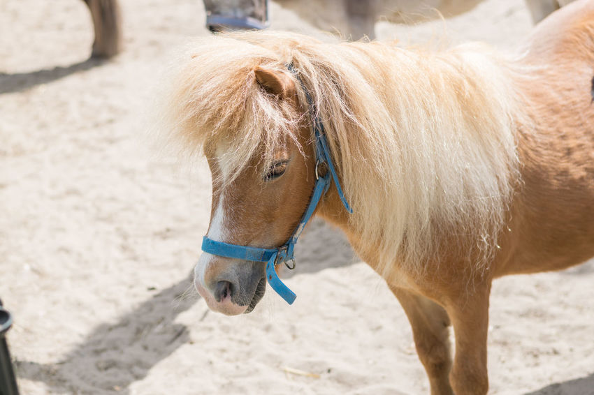 Sand Beach Domestic Animals Animal Outdoors Day Summer One Animal Mammal Animal Themes Vacations No People Nature Close-up The Square Breaker RCW Photography Hoorn Square Breaker Photography Richard NIKON D5300 Hoorn, Netherlands