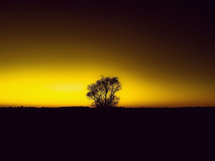 Silhouette Sunset Beauty In Nature Single Tree Landscape Nature Scenics Tree Outdoors Tranquility Perspectives On Nature EyeEmBestPics Landscape_Collection EyeEm Best Shots - Landscape Sun Louisiana Sky No People Sunlight