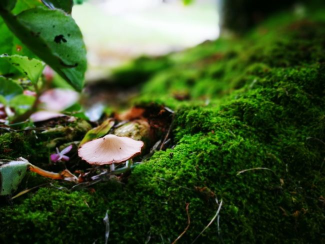Mushroom on the mossy field Mushroom Mossy Garden Nature Landscape Garden Stone Green Colour Of Life