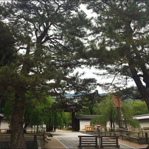 みどりの日に相応しい五月晴れです。近所のお寺を散策したい気分です。
