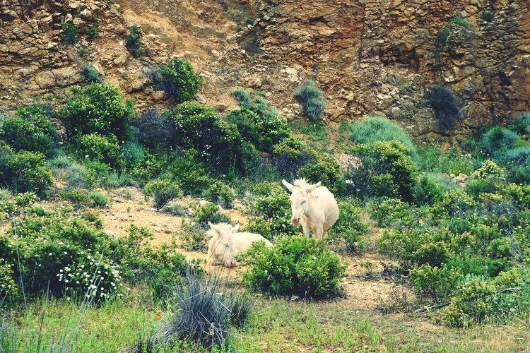 Asini bianchi aspettando la pioggia Asini Bianchi Asinara Sardinia Sardaigne  May2018 Roadtrip Family Pets High Angle View Tree Animal Themes Growing