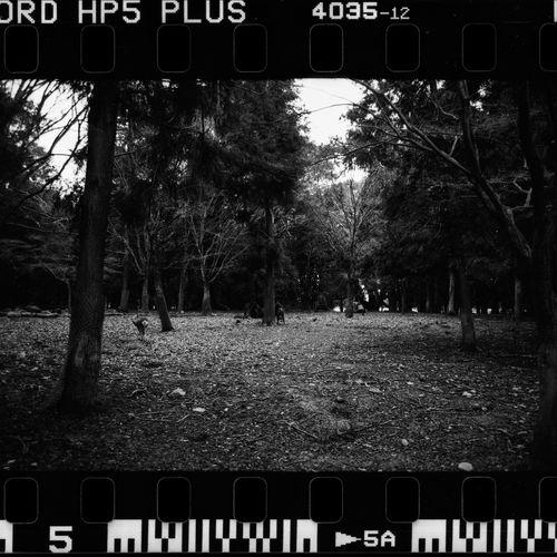 Kyoto - Nara On Film Film Film Photography Filmisnotdead Believeinfilm Ishootfilm Leicam6 Ilford Ilfordfilm IlfordHP5plus Japan Kyoto OSAKA Nara,Japan Travel Destinations Blackandwhite Black And White Film Photography