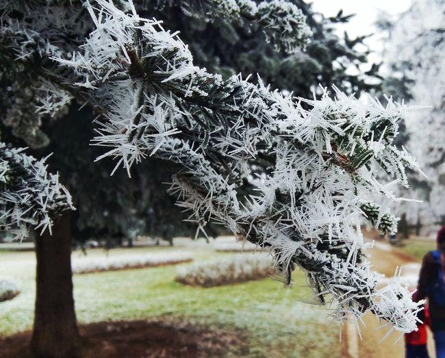 Winter Eis Ice