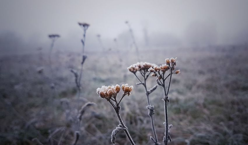 frosty & wild Wildflower Moody Weather Moody Foggy EyeEm Best Shots EyeEm Scenics View Beautiful Calmness Of Nature Minimalism Ambiance Simple Photography Silence Is Golden EyeEm Selects Growth Moment Of Silence Live Authentic Live Moments Focus On Details Focus Object Calmness EyeEmNewHere Flower Uncultivated Wilted Plant Close-up Grass Plant Dead Plant Dried Wilderness Flowering Plant Foggy Dried Plant Dry Wilted