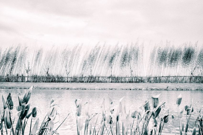 Blackandwhite Water Nature Cold Temperature Day Outdoors No People Beauty In Nature Winter Lake Sky Plant Scenics Tranquility