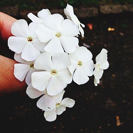 Flowers Beautiful White Sun