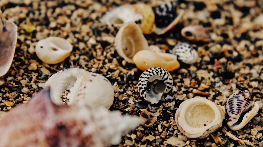 Macro to beach scenario Macro Nature Macro Photography Macro EyeEm Selects High Angle View No People Close-up Day Outdoors Nature Animal Themes