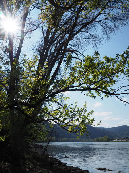 Beauty In Nature Branch Danube Danube River Day Krems Nature No People Outdoors Scenics Sky Sun Sunlight Tree Water