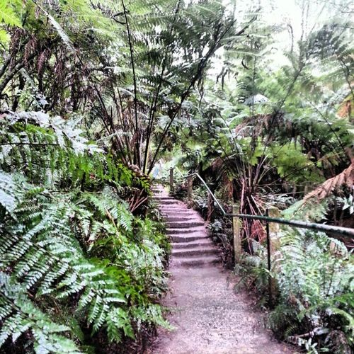 Toughing it up at the 1000steps Mtdandenong Sounfit Needgym Nature Steps