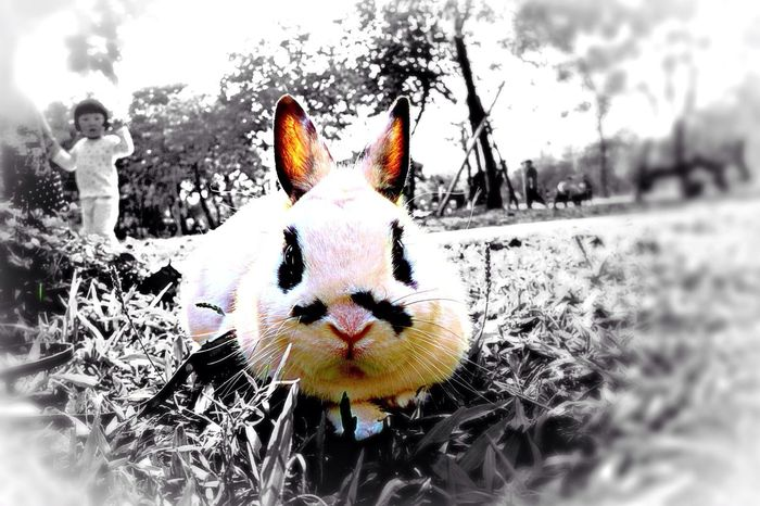 Hello There ❤️?❤️ Animal Love Bunny Love Innocent Face ..i Wanna Seem Simple..