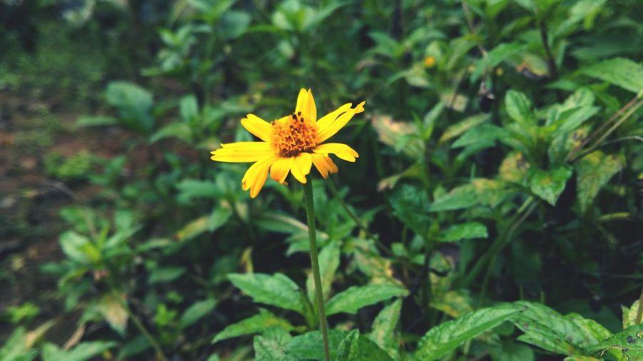 Onam Starts Yellow Flower Beauty In Nature First Eyeem Photo