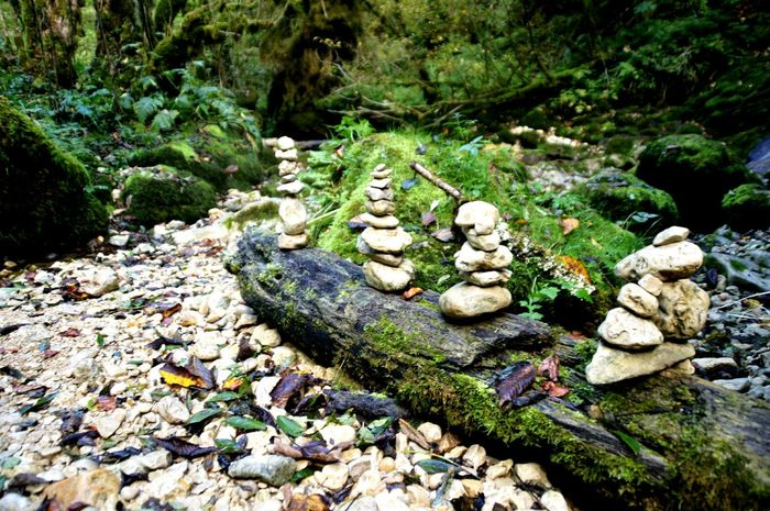 Cirque de Consolation High Angle View Growth Nature No People Outdoors Pebble Day Close-up Franchecomte Doubs Stones