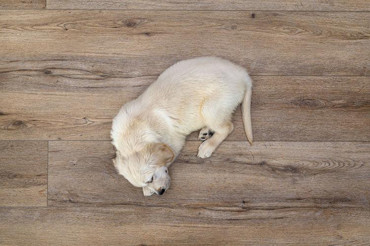 High angle view of dog sleeping on wood
