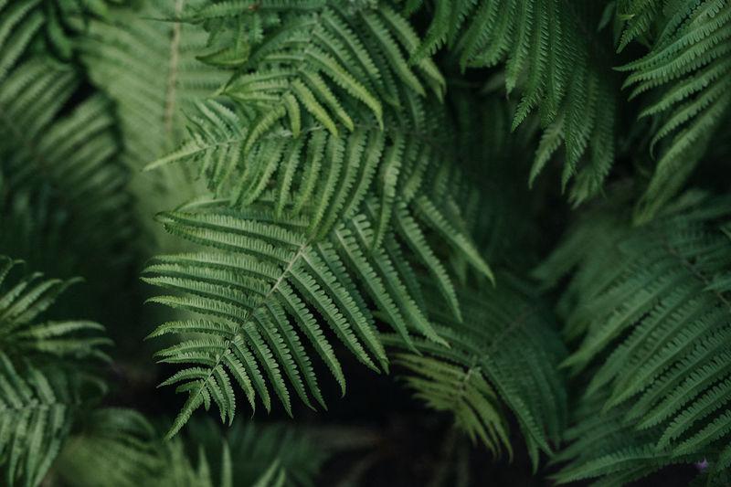 Green fern leaves