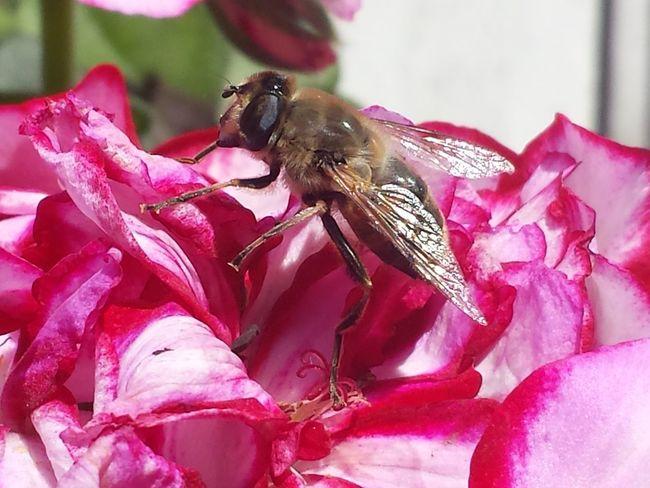 buzz Nature