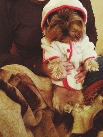 Dog Mommy Home Sweet Home Isn't she sweet ? *.* ?