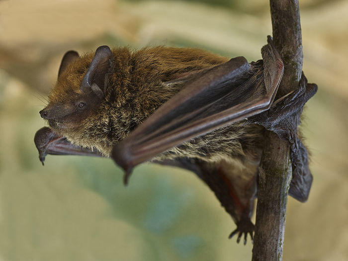 Bat Frirndships ! Batman Bat EyeEm Best Shots Closeup Portrait Bestoftheday Macro Wildlife OpenEdit Nature
