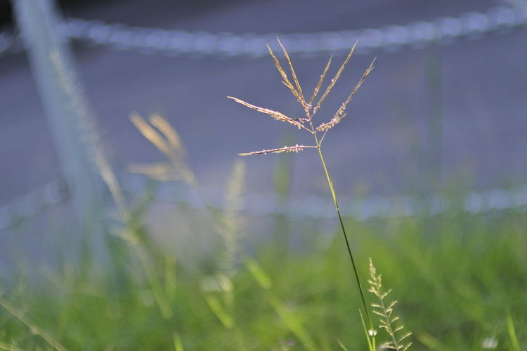 Close-up of silhouette plant on field