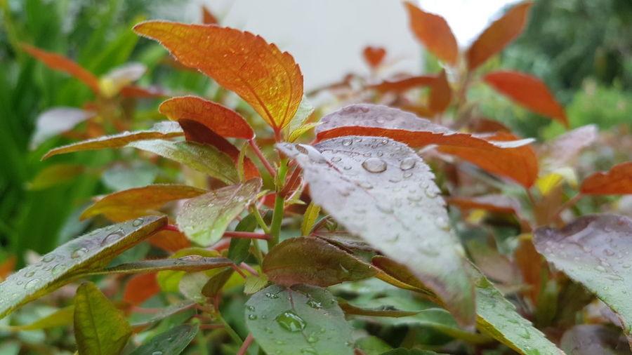 Close-up of wet plant during rainy season