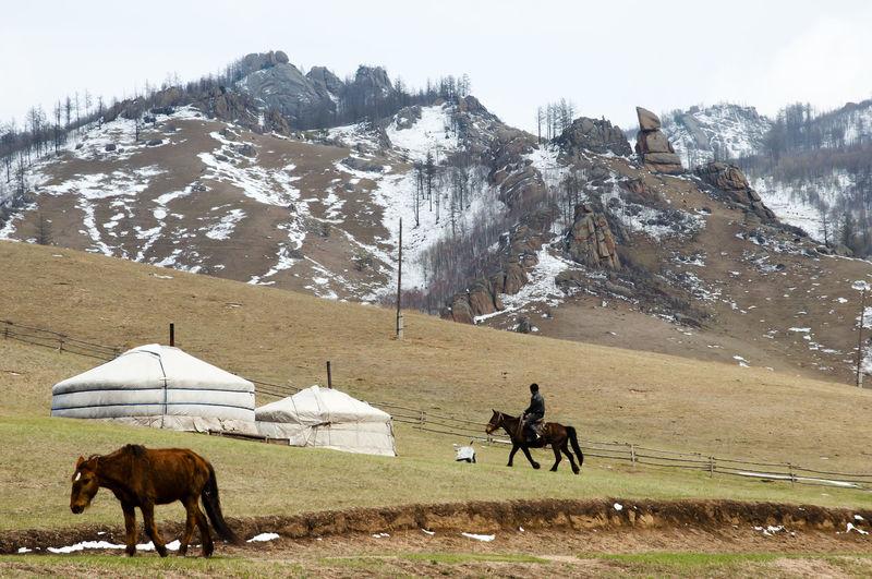 Yurts Home Mongolia Ulaanbaatar House Yurt