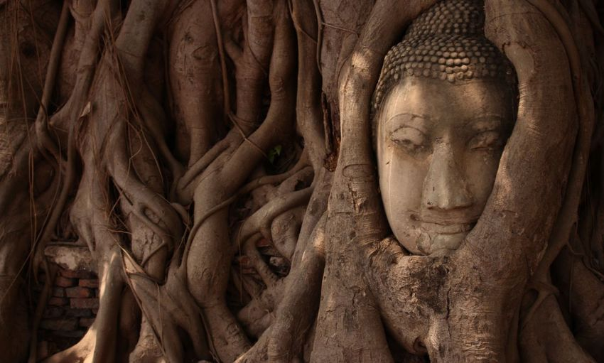 Close-Up Of Buddha Statue Against Roots