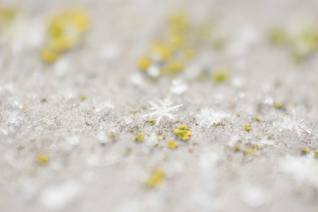 selective focus, no people, cold temperature, close-up, snow, day, nature, winter, white color, full frame, beauty in nature, outdoors, backgrounds, frozen, land, plant, tranquility, field, ice
