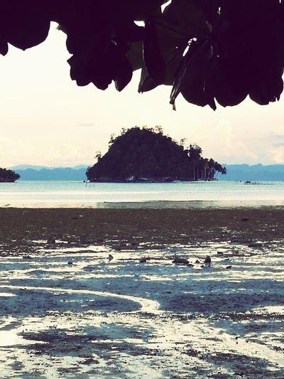 Tree Sea Sand