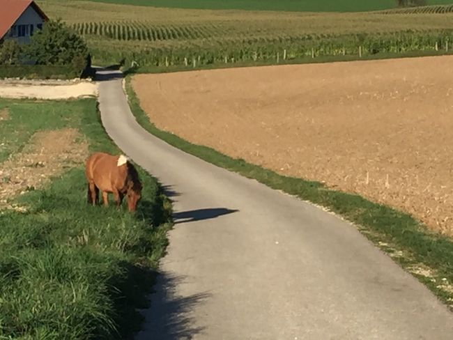 animal, horse, landscape, nature, jura, grandfontaine, switzerland, Found On The Roll