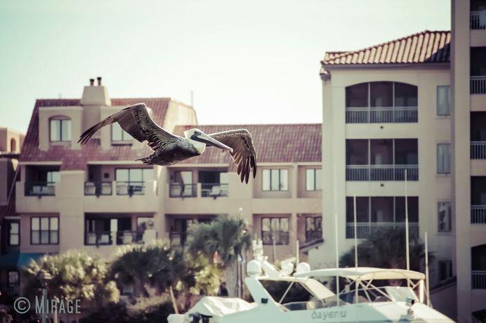 Pelican Photography Hilton Head Island EyeEm Best Shots