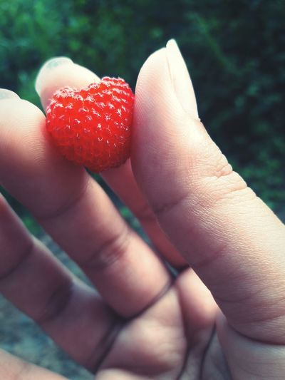 Red Fruit Close-up Plant Nature Human Hand Human Body Part One Person Holding Outdoors Food Summer Day Fingernail Nail Polish Freshness Nature EyeEmNewHere