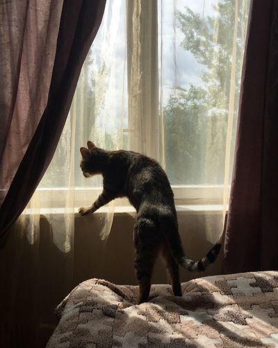 View of a cat looking through window