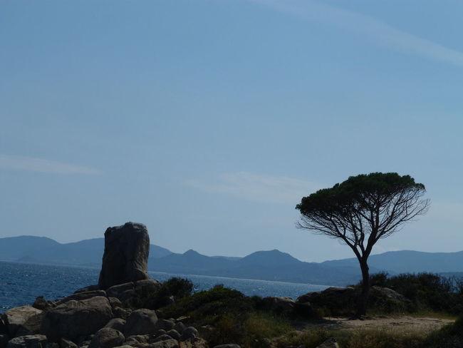 rock and tree Sardinia Sardegna Italy  Sardinia Sardegna Tree Mountain Sky Shore Tranquil Scene Calm Coast Tranquility Idyllic Horizon Over Water Scenics Rocky Mountains