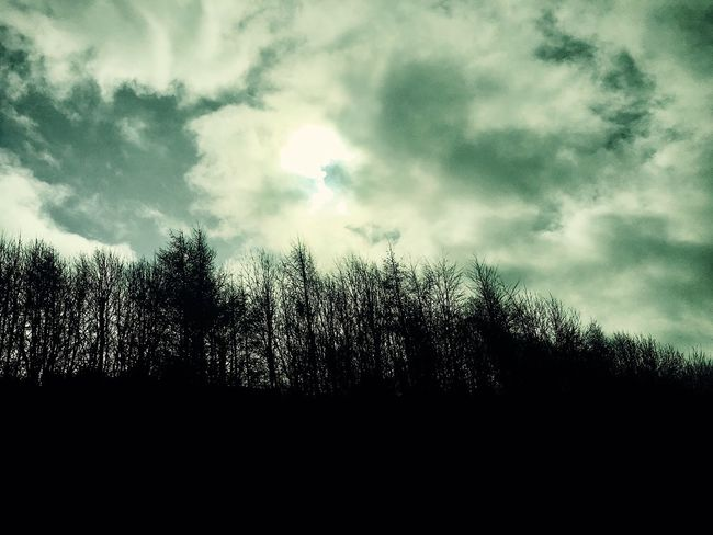 Leeds, UK Nature Cloud - Sky Growth Beauty In Nature Sun ☀️ ⛅️ BeautyTree Sky Tranquility No People Outdoors Scenics Forest Tranquil Scene Low Angle View Day Iphone6 PhonePhotography