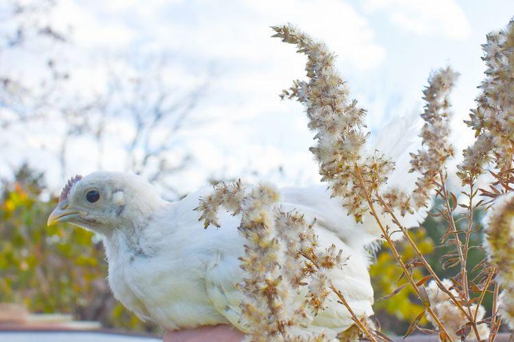 Close-up of a bird on a tree