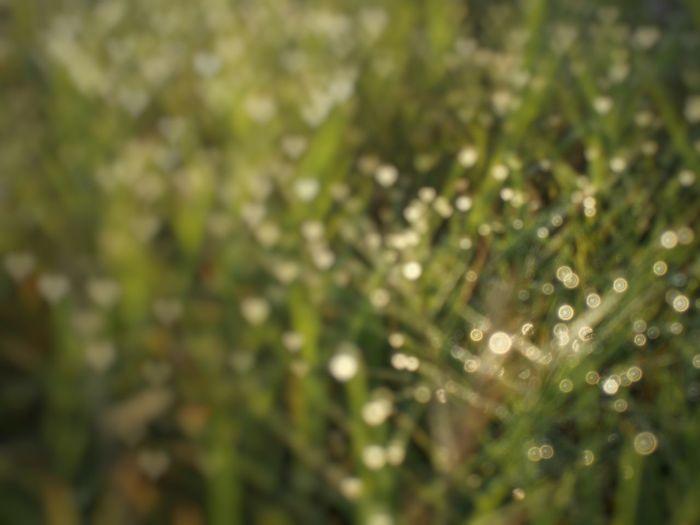 Grass & bokeh