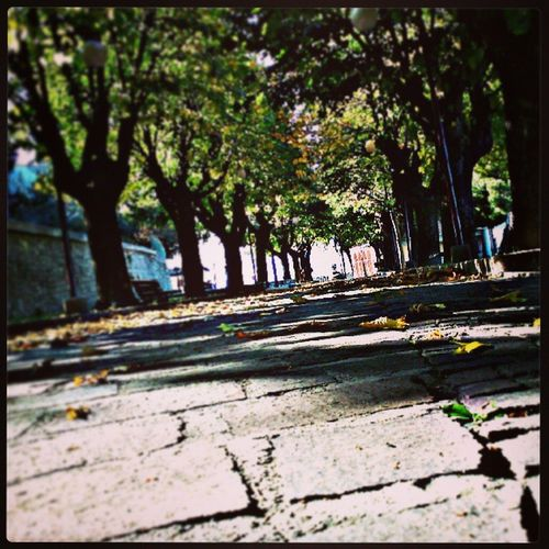 Desolation road _Mayfair filter. Autumn ColorsOfAutumn Jj  Picoftheday photooftheday instagramers instapic igersItalia igersAbruzzo igersTeramo