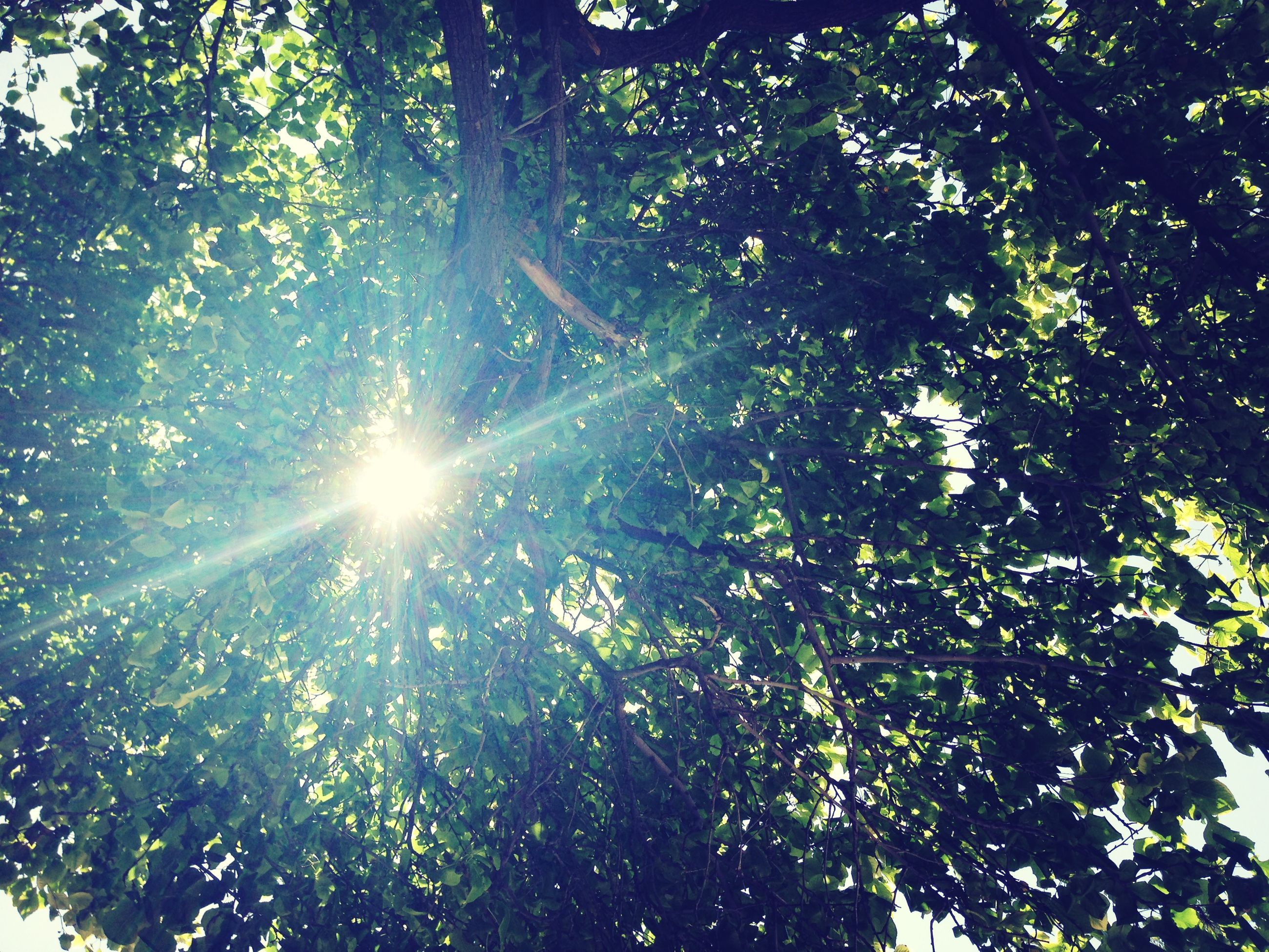 tree, low angle view, sun, growth, sunlight, sunbeam, tranquility, lens flare, nature, beauty in nature, branch, green color, sunny, scenics, tranquil scene, day, sky, bright, outdoors, no people