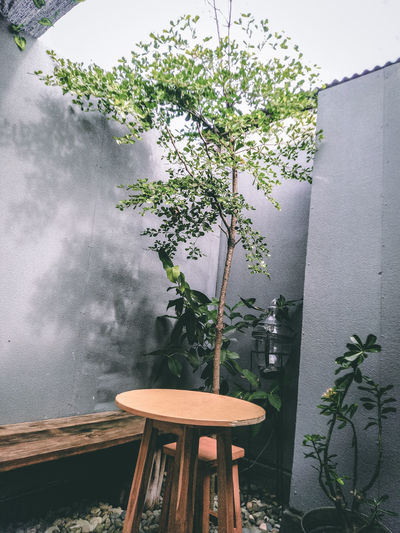 Potted plant on table against wall