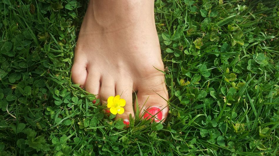 What's in a Saturday, you ask? Feet in Barefoot damp grass, wet nose on cheek, book in hands and neighbours blasting Elvis. Not half bad at all Summer Showcase July Green Yellow Red Red Nails Yellow Flower Green Grass Summer Barefoot Freedom TakeoverContrast