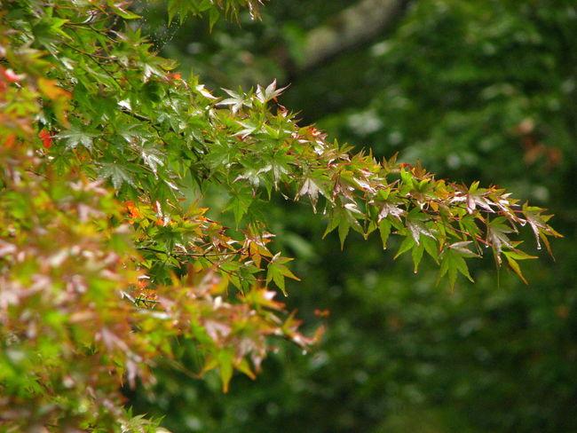Autamn Nature 紅葉 Japan