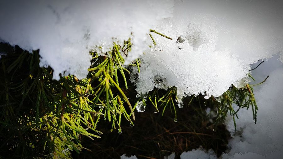 Nature Snow ❄