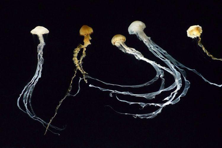 Jelly Fish Aquarium at Monterey Bay Aquarium