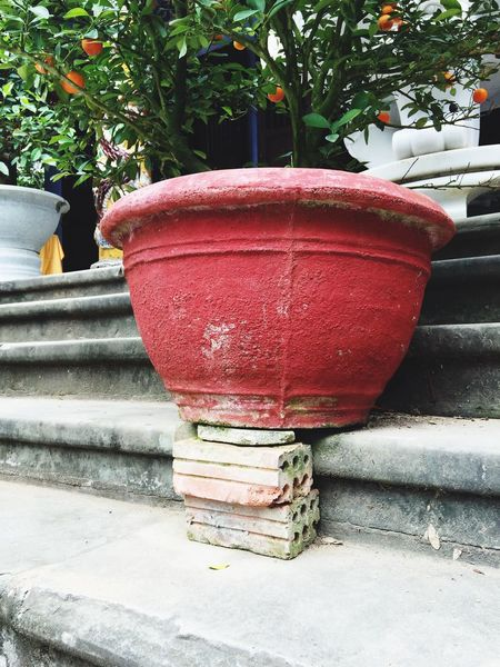 Interesting construction Vietnam Da Nang Marble Mountains Pot Construction Bricks Plant Tree Clementine Tangerine